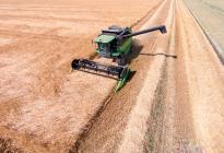 Gruener Maehdrescher bei der Getreidernte von vorne